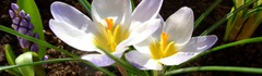 24 Май и пролетни уикенд в България